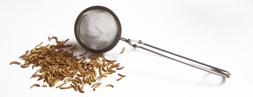 Tipps Teesieb Kochen mit essbaren Insekten probieren und zubereiten