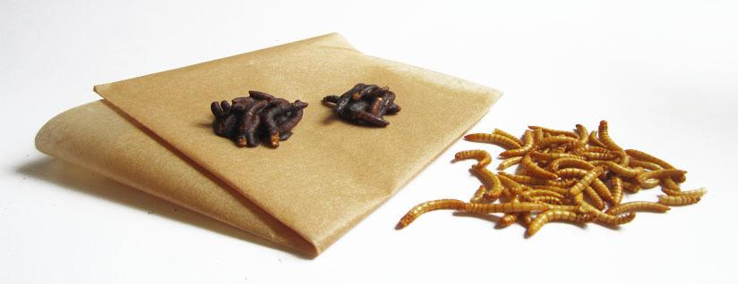 Tipps Backpapier Insekten in Schokolade Schoko Insekten Insektenschokolade