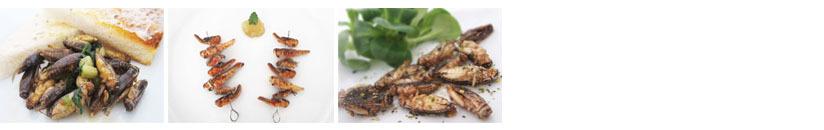 Rezepte mit Insekten zubereiten essbare Grillen kochen und zubereiten