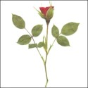 Red Rosebuds with leaves