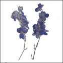 Larkspur with Stem Blue