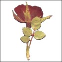 Large Rose with stem Dark Red