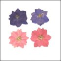 Assorted Colour Larkspur