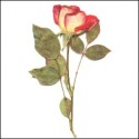 Rose with stem Red & Pink
