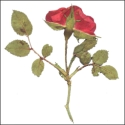 Large Red Roses with leaves