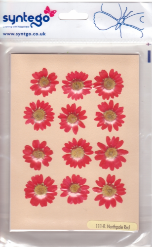 Syntego Northpole Daisies Red