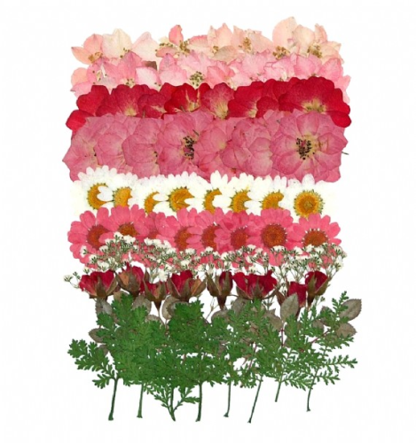 Joanna Sheen 80 Piece Variety Packs Dried Pressed Flowers - Pastel Pinks