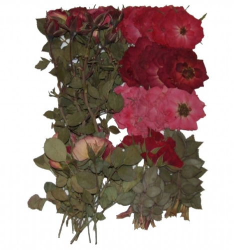 Joanna Sheen 80 Piece Variety Packs Dried Pressed Flowers - Real Roses