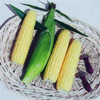 Sweet Corn Earlibird F1