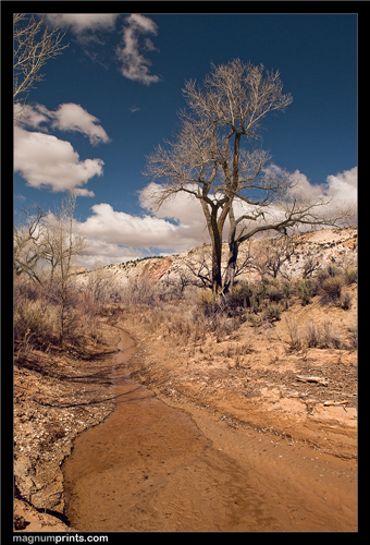 Capitol Reef Trail
