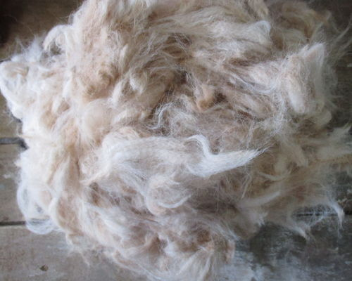 Raw Unwashed Alpaca Fleece in Ivory for Craft, Spinning and Stuffing - 2nd Quality