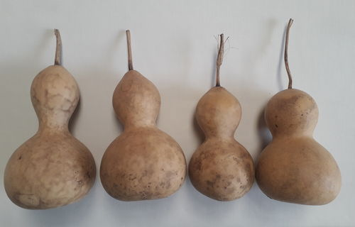 Dried and Washed Small Sized Gourds - Set of Four