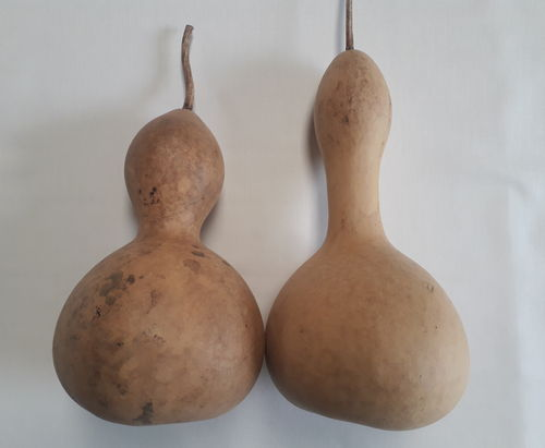 Dried and washed Large Bottle gourds Set of Two