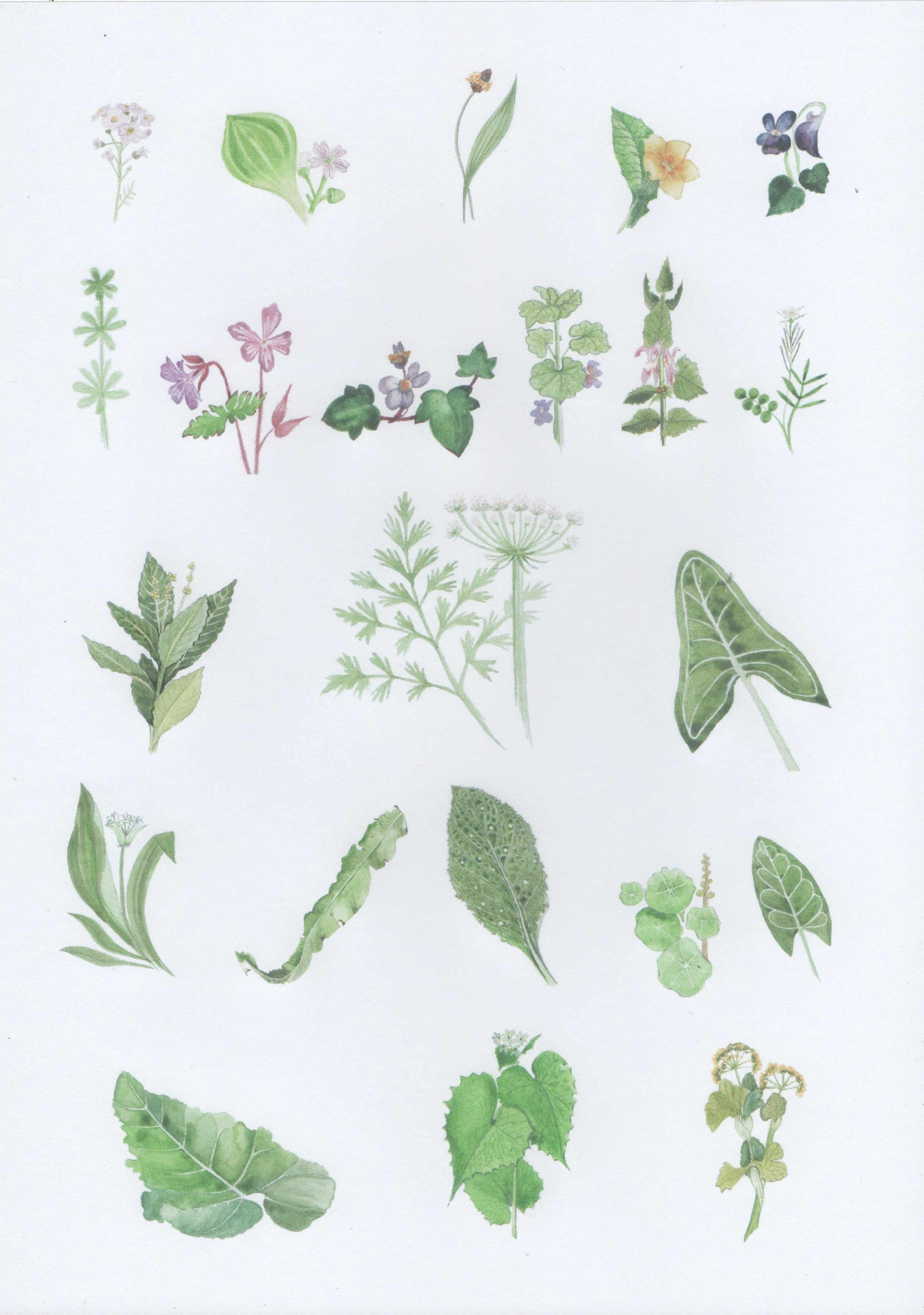 Spring_Identification_Wall_Chart