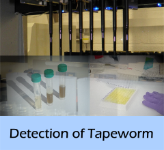 Detection_of_Tapeworm