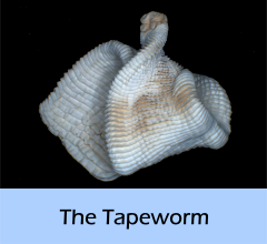 The_Tapeworm