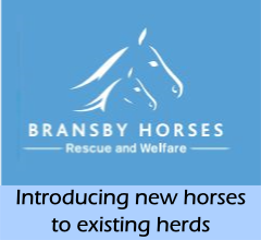 news-Bransby-new_horses
