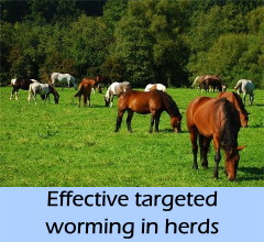 news-targeted_herds