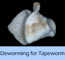 worming_for_tapeworm_a