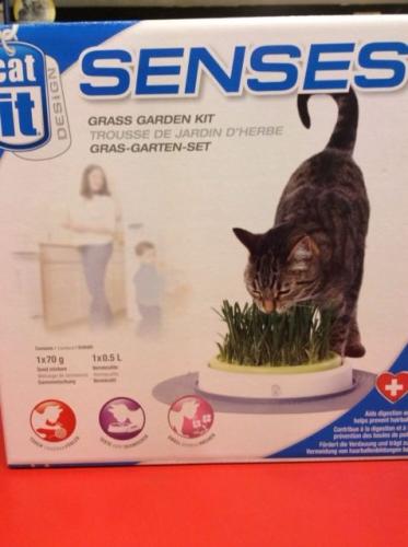 catit senes grass garden kit